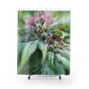 Blooming with Purple Cannabis Shower Curtain